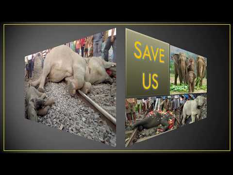 A Permanent & Definitive Solution to Save Elephants from Train Collisions