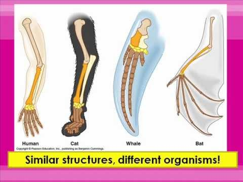 Homologous and Vestigial Structures