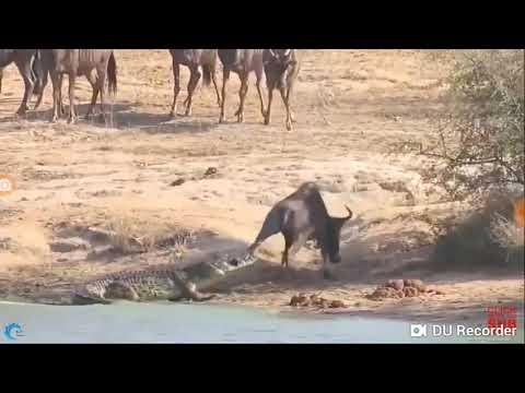 Sự sinh tồn của các loài động vật trong thiên nhiên