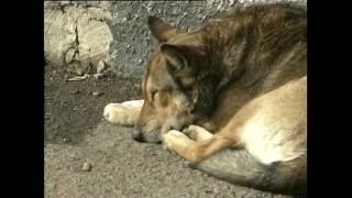 Любовь к собакам