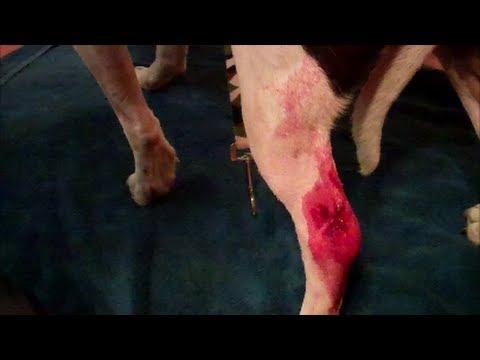 stop dog bleeding