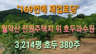 [부동산] #호두과수원 이광규142] 호두과수원의 지번…