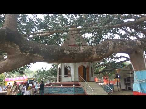 Amani Babar Than  temple and tree best tourist place  in assam