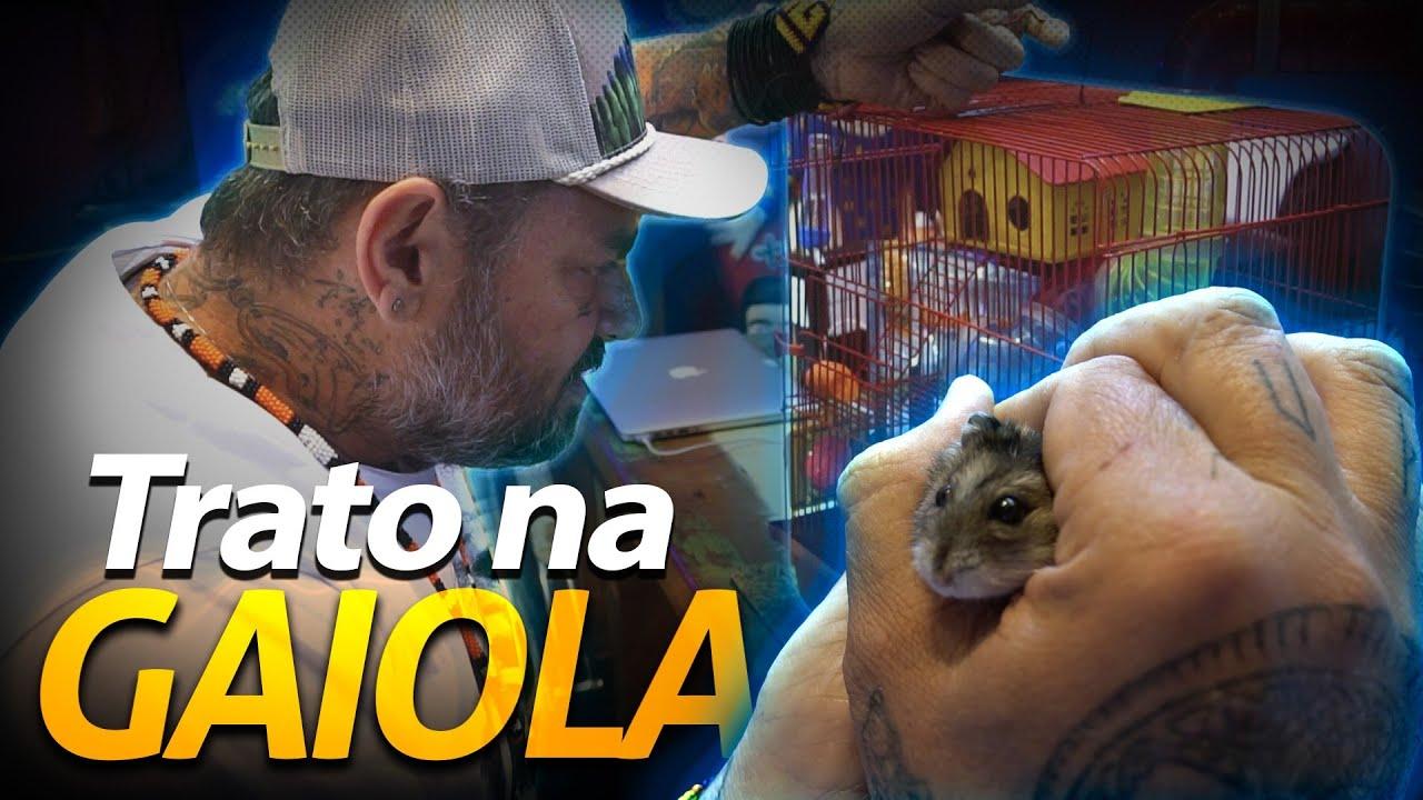 ARRUMANDO A CASINHA DA FIFÓ! | A CASA DOS BICHOS