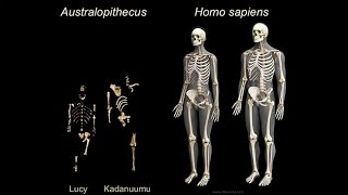 Origins of Genus Homo: What Who When Where?; Early Body Form; Life History Patterns