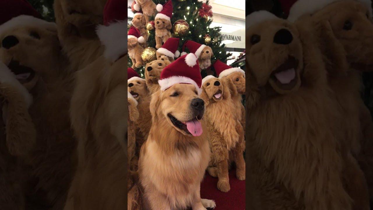 christmas tree full of doggos viralhog