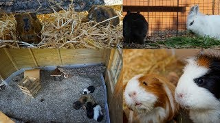 do they like their new home? evening pet jobs