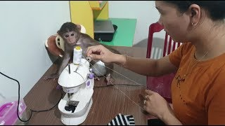 Baby Monkey | Mom Makes New Pants For Cute Doo