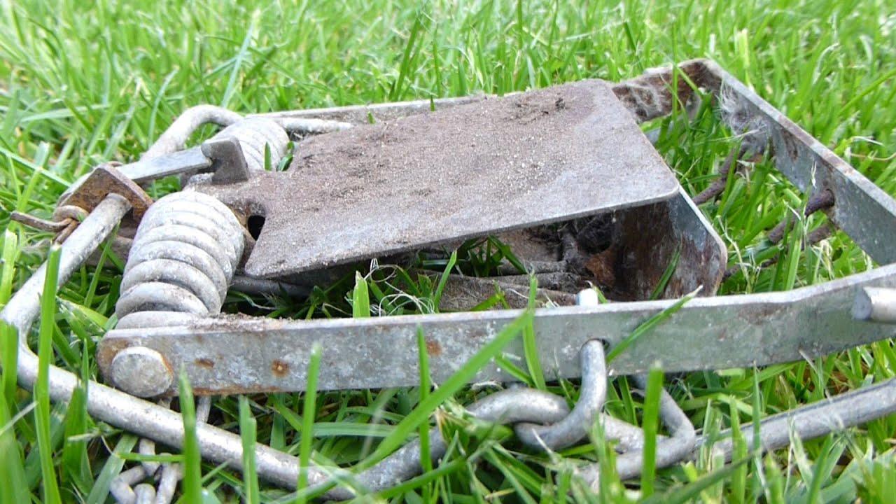 Rat Versus Fenn Trap Explosive Action