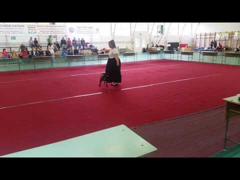 Staffordshire Bull Terrier dog dancing - hobby beginner/kezdő osztály