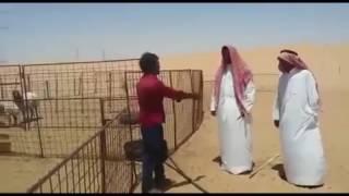 Saudi me aane wale ki ye halat