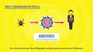 Le rôle de la virologie humaine