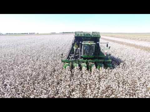 cotton picking 2017