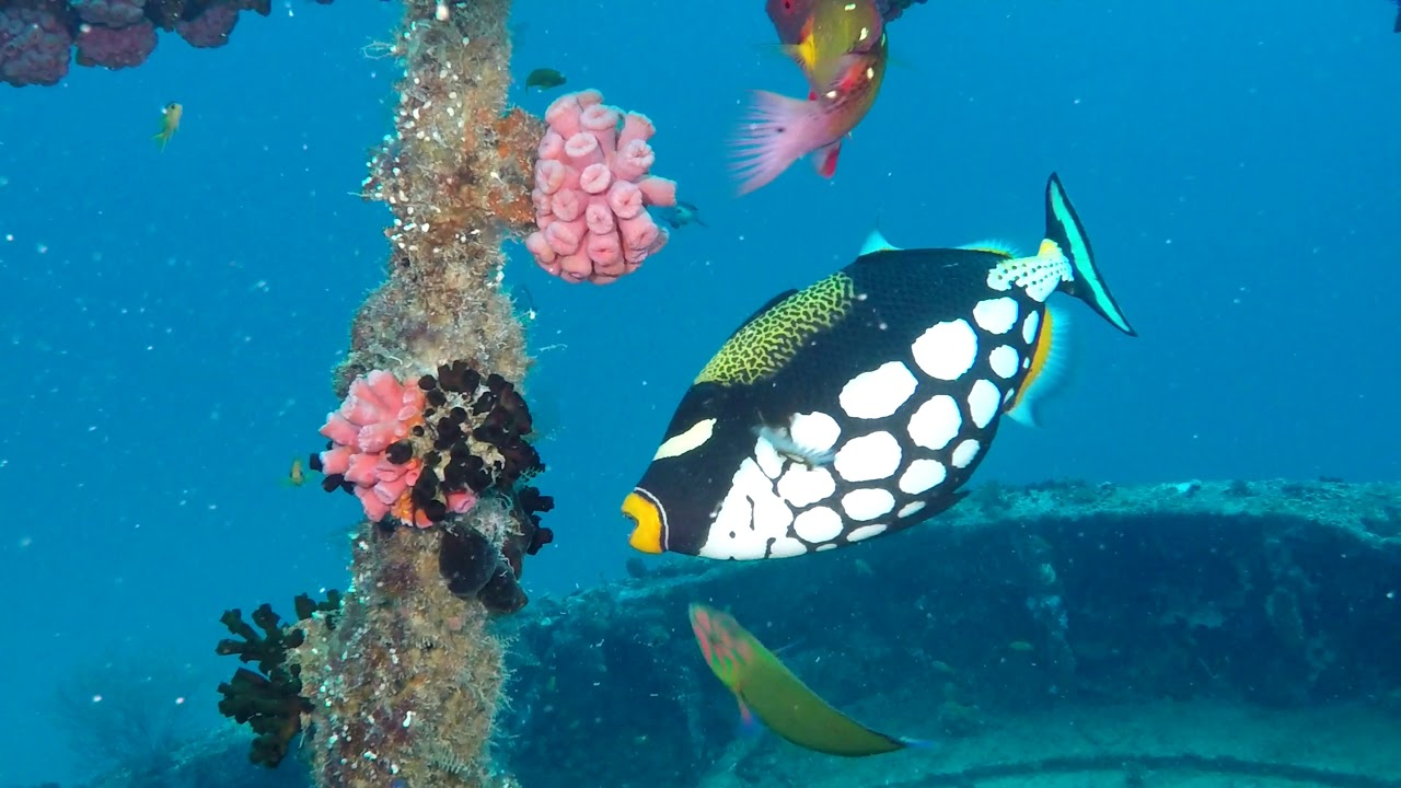 Diving Embudu House Reef and other dive sites in the South Male Atoll, Maldives February 2019