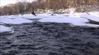 Зимняя природа в Дубровицах и незамерзающая река Десна (25.01.16)(Течение реки Десна настолько сильное, что вода на поверхности полностью не замерзает и, из-за этого, получае..., 2016-05-09T06:12:06.000Z)