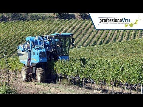 ProfessioneVite | Vendemmia selettiva: Braud 9090L con sistema EnoControl | Tenute Ruffino