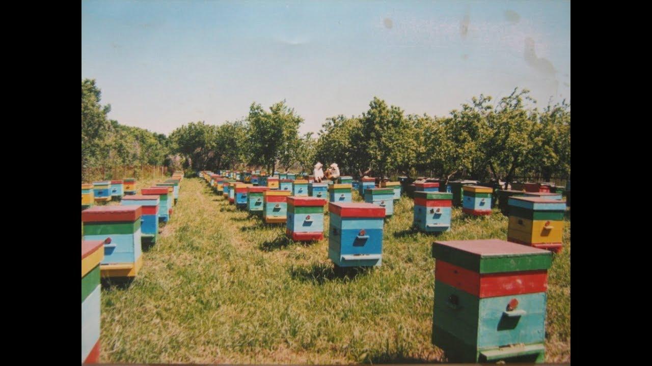 Цена пчелиных маток зависит от месяца реализации: самые дорогие в мае,. Отправка пчелиных маток и пчелопакетов в любой регион украины.