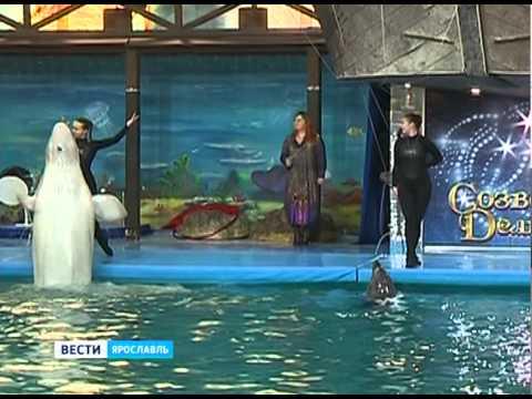 В ярославском дельфинарии заговорил полярный кит