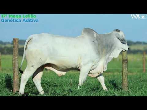LOTE 129 - REM 10054 - 17º Mega Leilão Genética Aditiva 2020