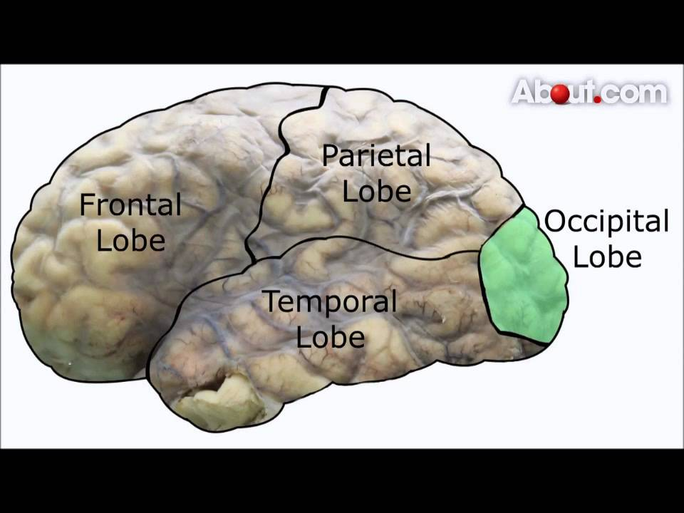 The Four Lobes And The Left And Right Hemispheres Of The Brain Youtube