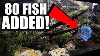 beginner-fish-added-to-the-aquarium