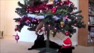 おもしろ猫ムービー集 猫対クリスマスツリー YouTubeで月額36万円の不労...