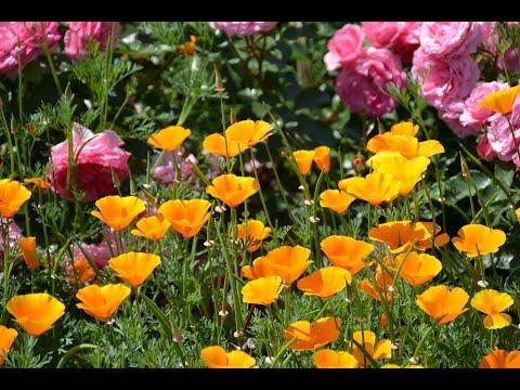 Tên các loài hoa P2