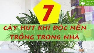 7 loại cây hút khí độc tốt nên trồng trong nhà
