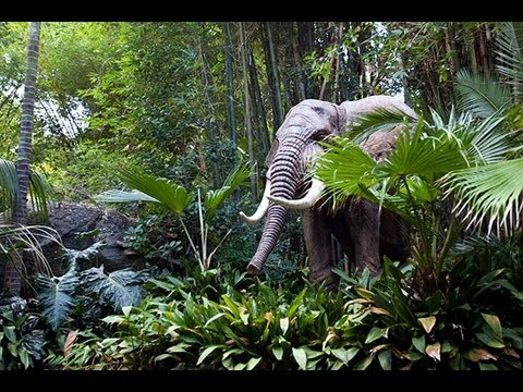JUNGLE CRUISE at Disneyland (FULL RIDE) POV - GREAT QUALITY (1080p HD)