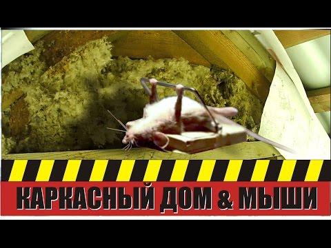 Мыши в стенах каркасного дома