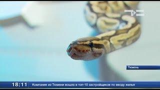 Повелитель змей - ТСН 5 августа 2017