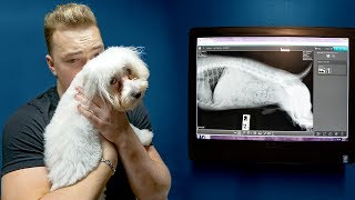 BAD NEWS ABOUT MY PUPPY! 😔 thumbnail