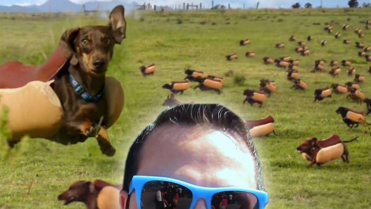 weiner dog heinz commercial