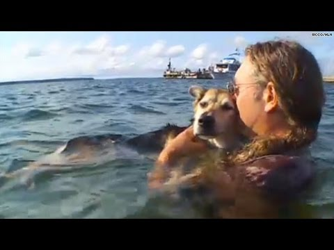 Interview: Schoep, the dog in the water