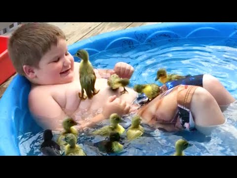 Cute and Funny Ducks! Duck Videos to Make You Smile 😃