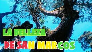 Gambar cover SAN MARCOS, GUATEMALA SU BELLA NATURALEZA, Nos perdimos