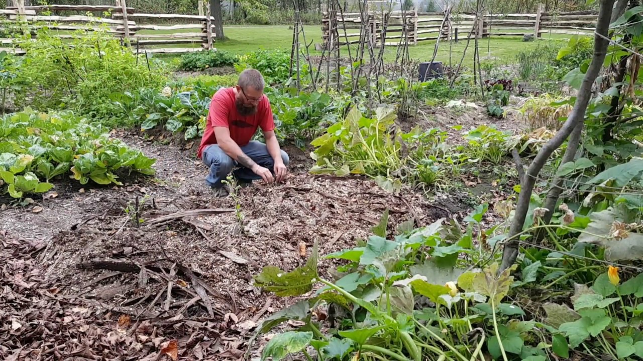 Cold Climate Permaculture Using Wood Chip Mulch In The Garden