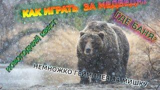 видео Краткая информация о медведе