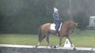 ****7 y old St Georges gelding for sale by Weltmeyer-Matcho