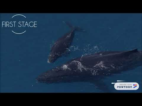Endangered Species - Blue Whales
