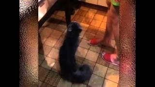 Кот который умеет подтягиваться 😂🐱