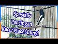 Kacer Gacor Bocor Spesialis Pancingan Kacer Macet Bunyi  Mp3 - Mp4 Download