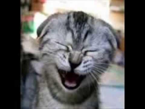 sons de gatos miando gratis