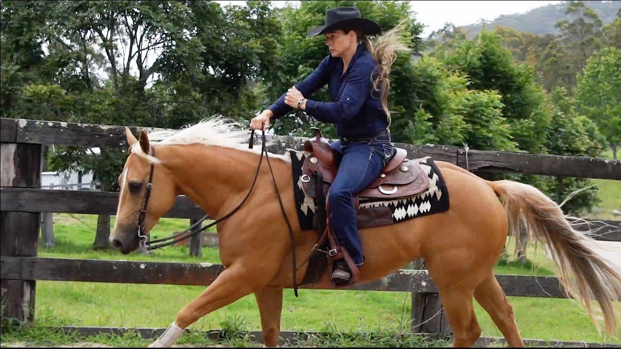 Sport Horse Films Australia - HORSE FOR SALE VIDEO | Firefly Rey