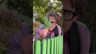 Типы Людей Осенью (смех, приколы, юмор, поржать, смешные видео)
