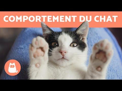 Comportement Du Chat - Les Clés Pour Les Comprendre !