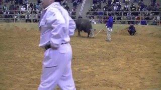 平成26年3月9日 春選抜花形大闘牛大会 対戦時間:23秒.