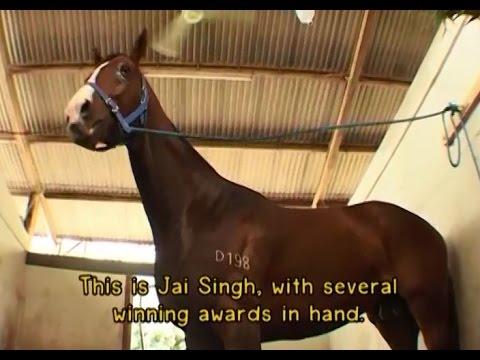 ทีวีบูรพา กบขึ้นเครื่อง : โลกของม้าแข่ง (English Subtitle) EP.1