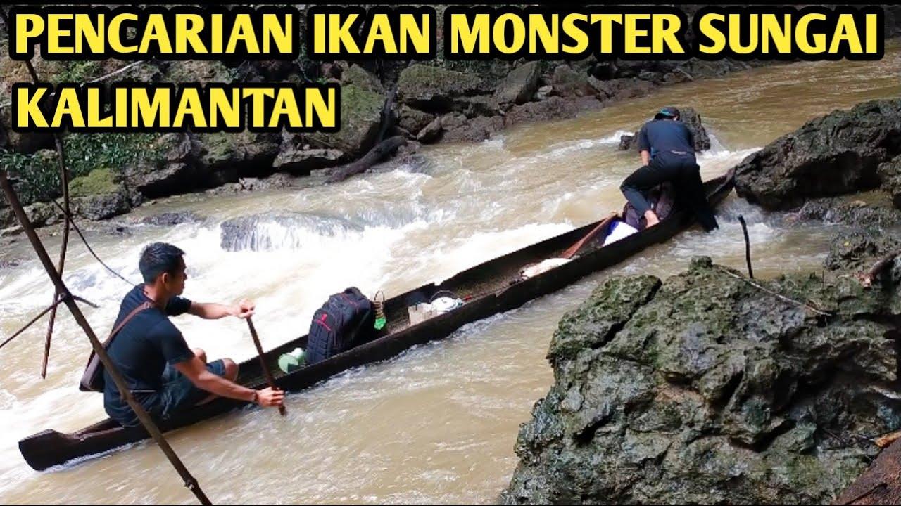 Pencarian ikan Monster sungai Kalimantan