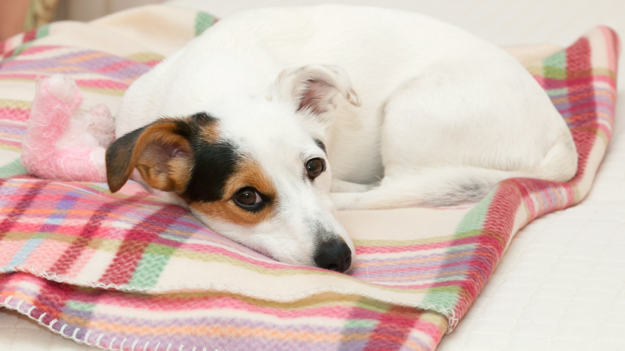 visszerek a kutyáknál a gyomorban vitaminokra van szükség a visszérben